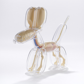 Anatomy Balloon Dog