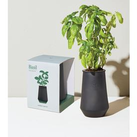 Tapered Tumbler Indoor Garden Kit - Basil BASIL_BLACK