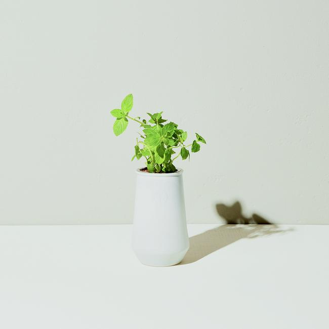 Tapered Tumbler Indoor Garden Kit - Mint