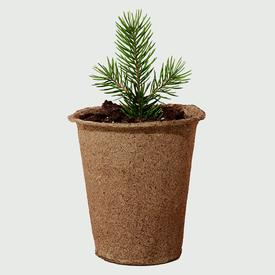 Tree Kit - Blue Spruce