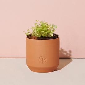 Tiny Terracotta Grow Kit - Good Luck Clover