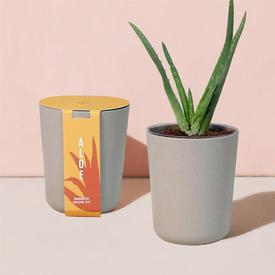 Bamboo Grow Kit - Aloe