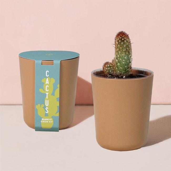 Bamboo Grow Kit - Cactus