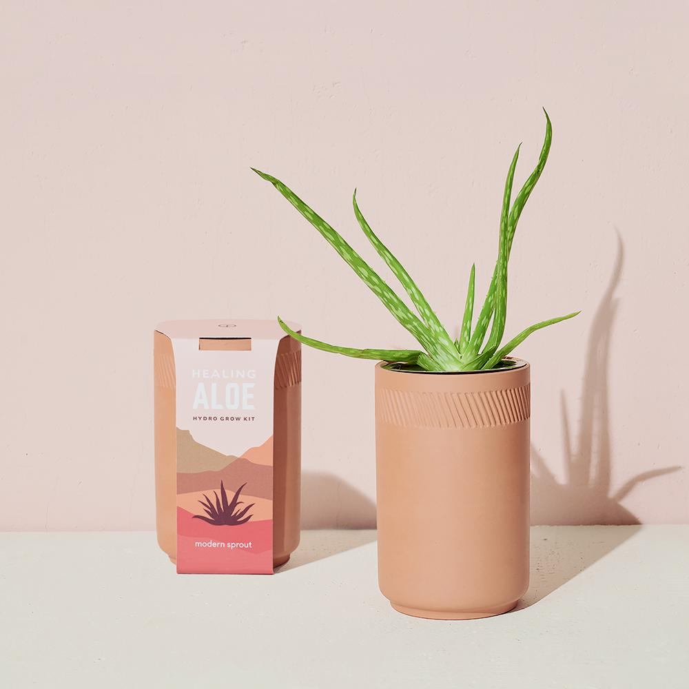 Terracotta Indoor Garden Kit - Aloe