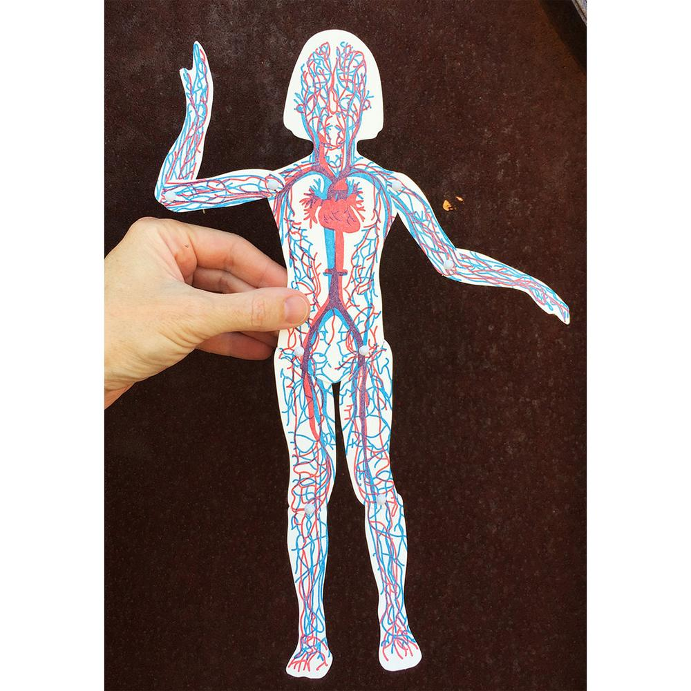 Posable Circulatory System Paper Doll